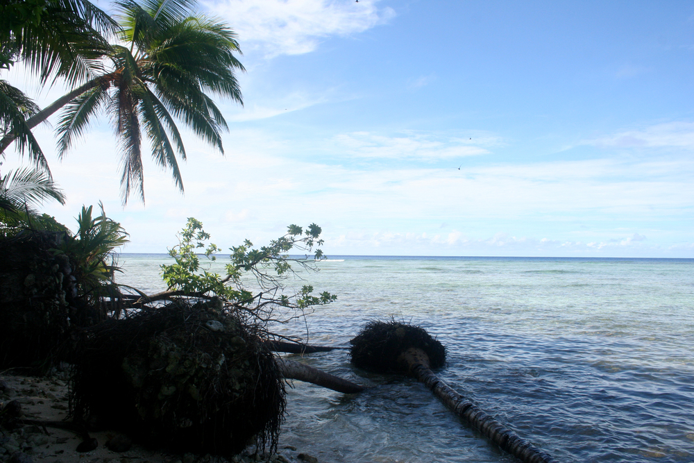 A king tide rolled through Falalis in December 2008, eroding the coastline and leading to the death of many of the coconut trees closest to the ocean.