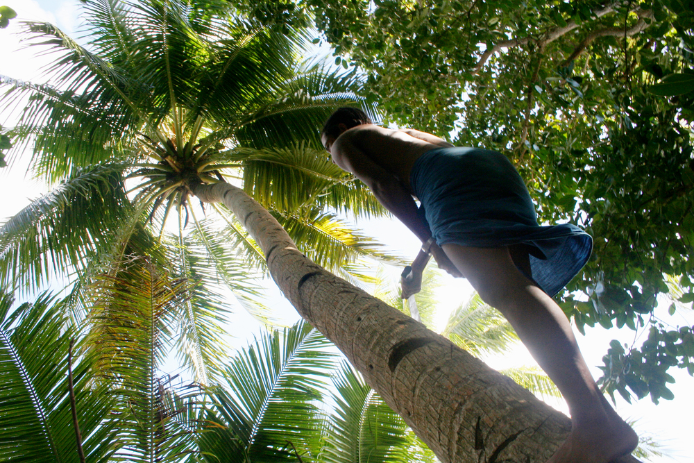 The coconut is everything: water, fat, fiber, protein, carbohydrates. By the time kids are ten most of them can scramble up a tree without a problem.
