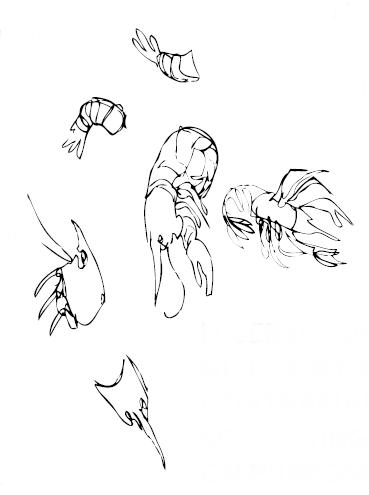 Crawfish 3.png