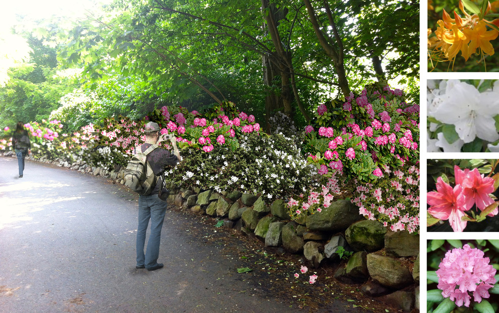 Digital rendering of the Azalea Walk in Brookdale Park at springtime. Project completed in October 2013.