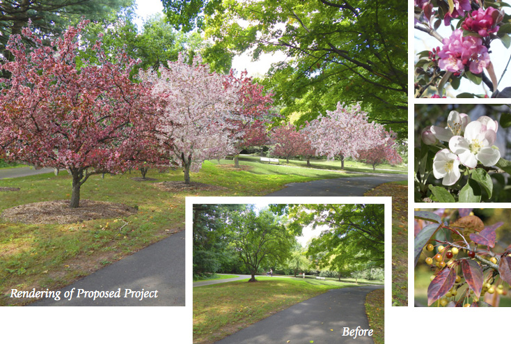 Digital rendering of Brookdale Park's restored Crabapple Grove at springtime with inset photo of existing conditions.