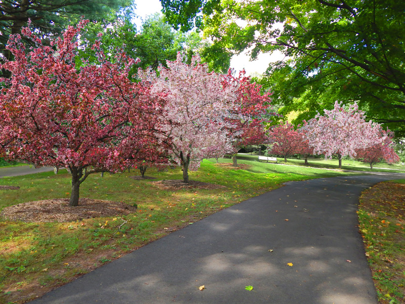 Digital rendering of the currently underway Crabapple Grove Restoration project.