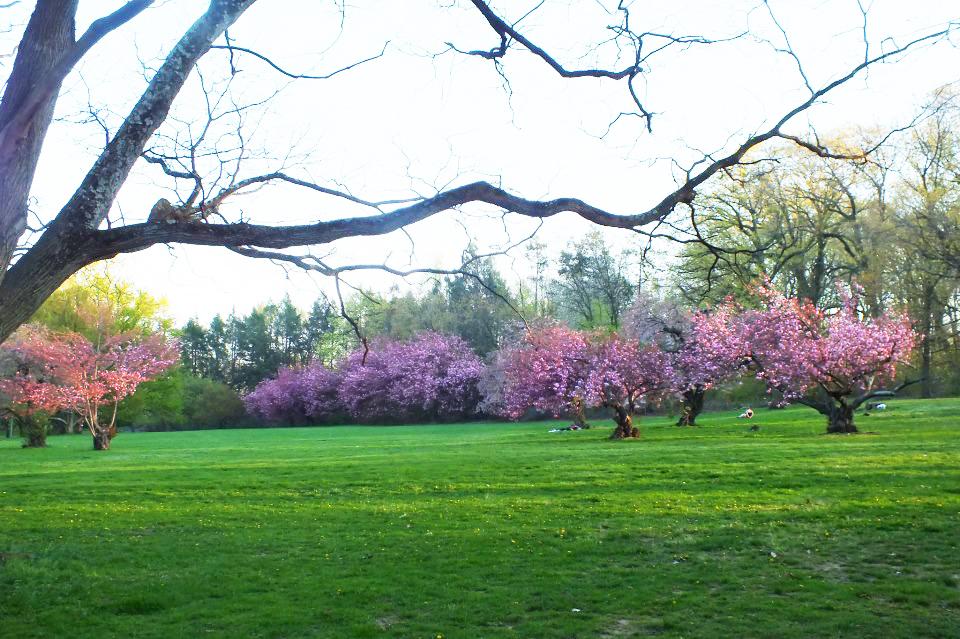 cherry-grove.jpg