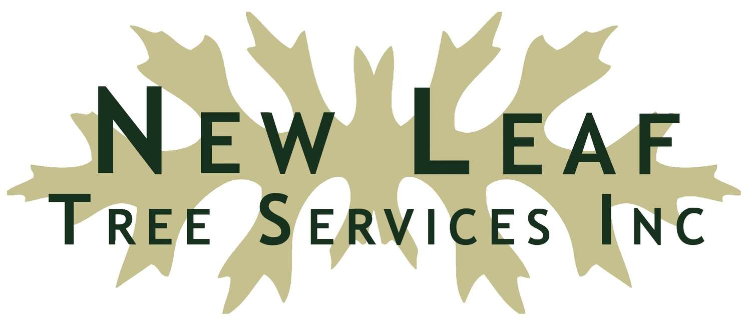 Certified Arborists / Columbia & Rensselaer Counties / New Leaf Tree Services Inc