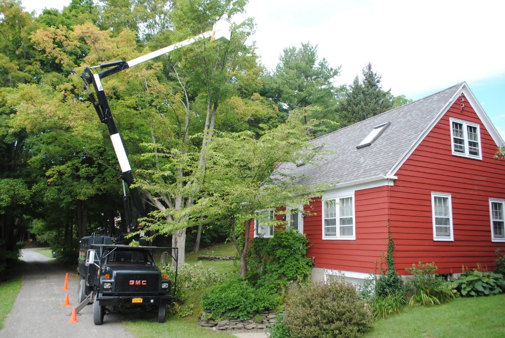 Why Hire New Leaf Tree Services?