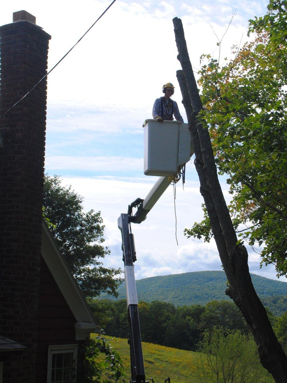 tree-service-testimonial