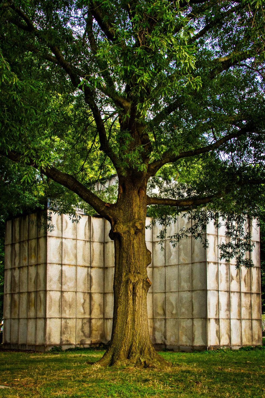 Battery Park Tree