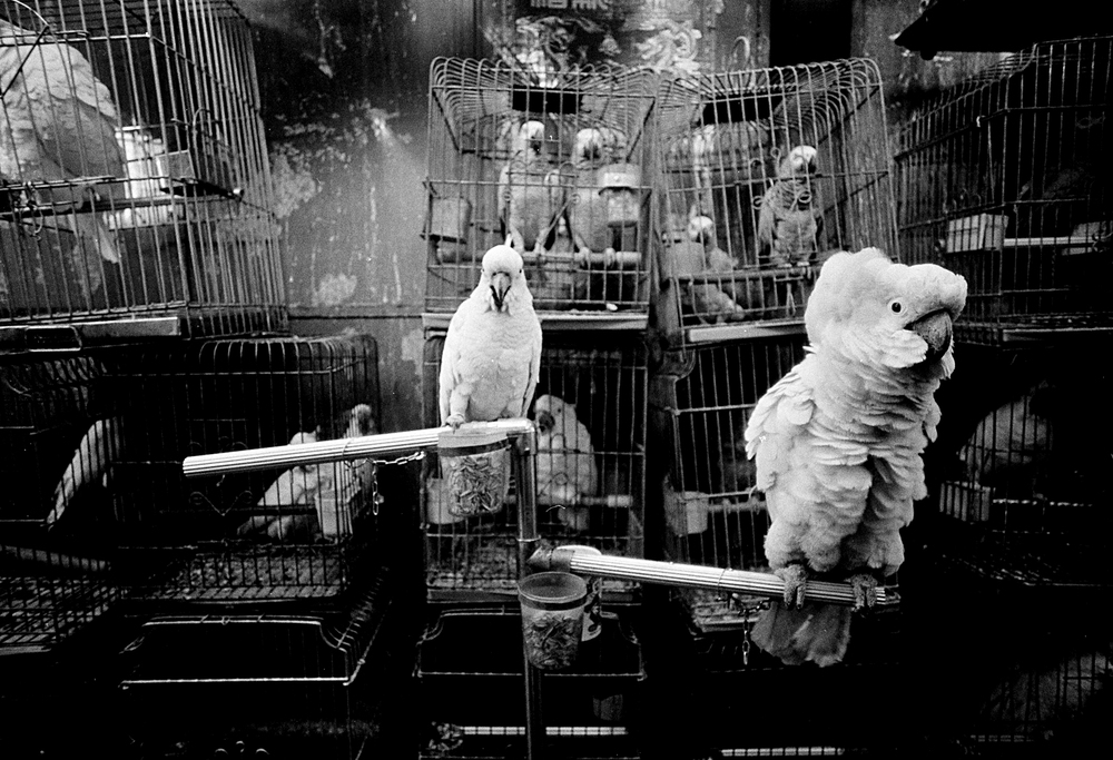hk_birds_untitled_20130805.jpg