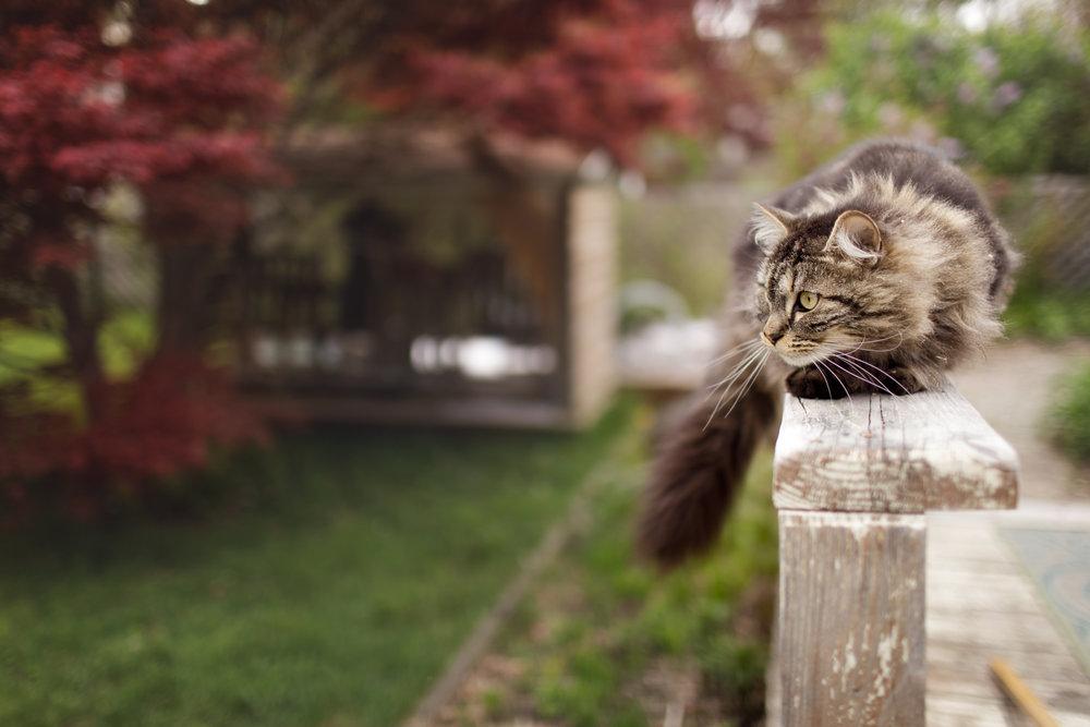 cat on deck railing in Wakefield, RI