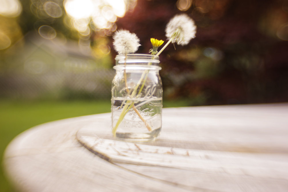 Dandelions in a jar in Wakefield, RI photographed using Lensbaby