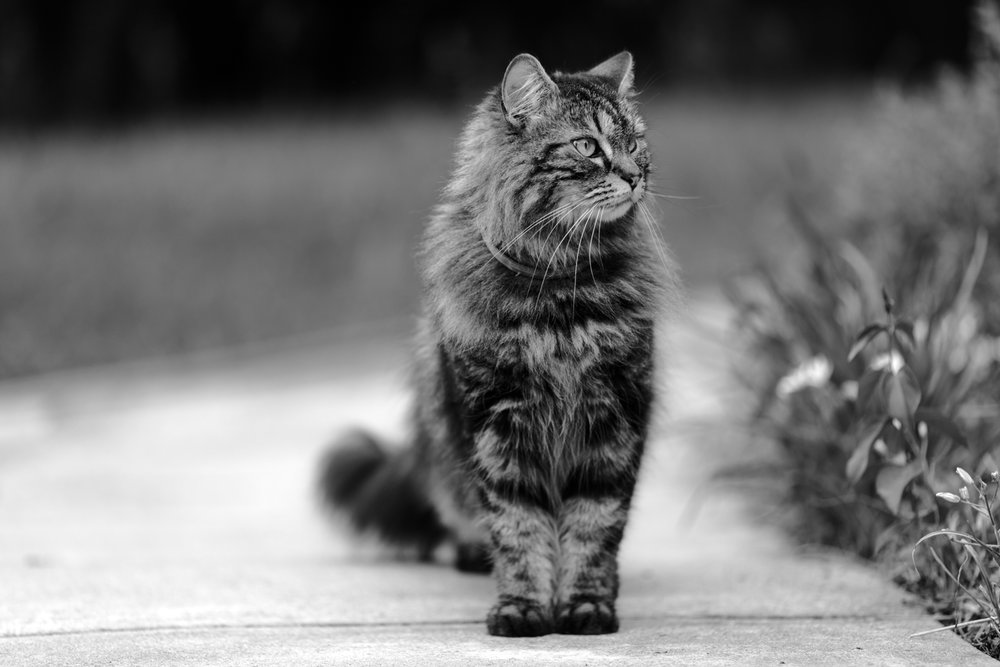 Black and white photo of cat in Wakefield, RI