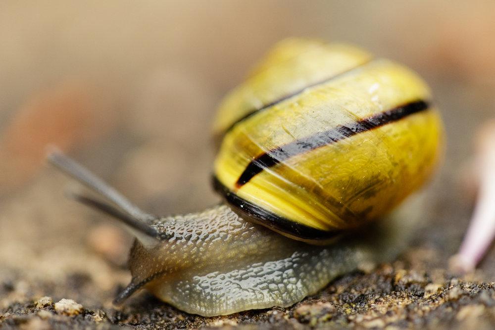 Land snail macro image