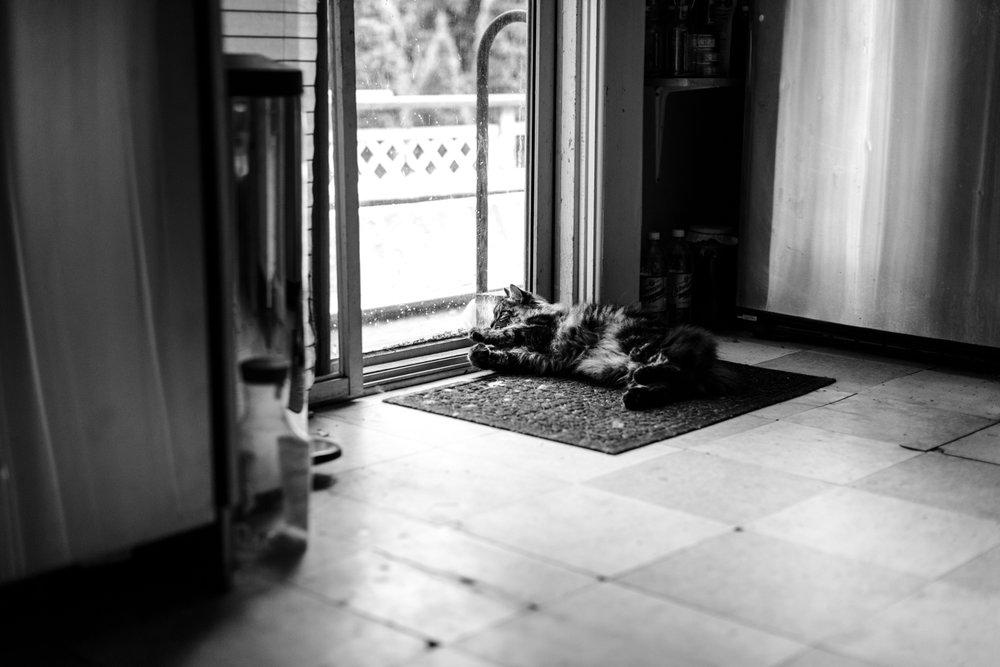 Maine Coon cat by sliding door