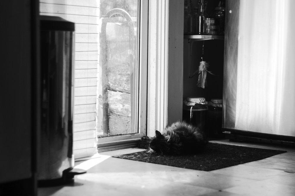 cat lying in light in doorway