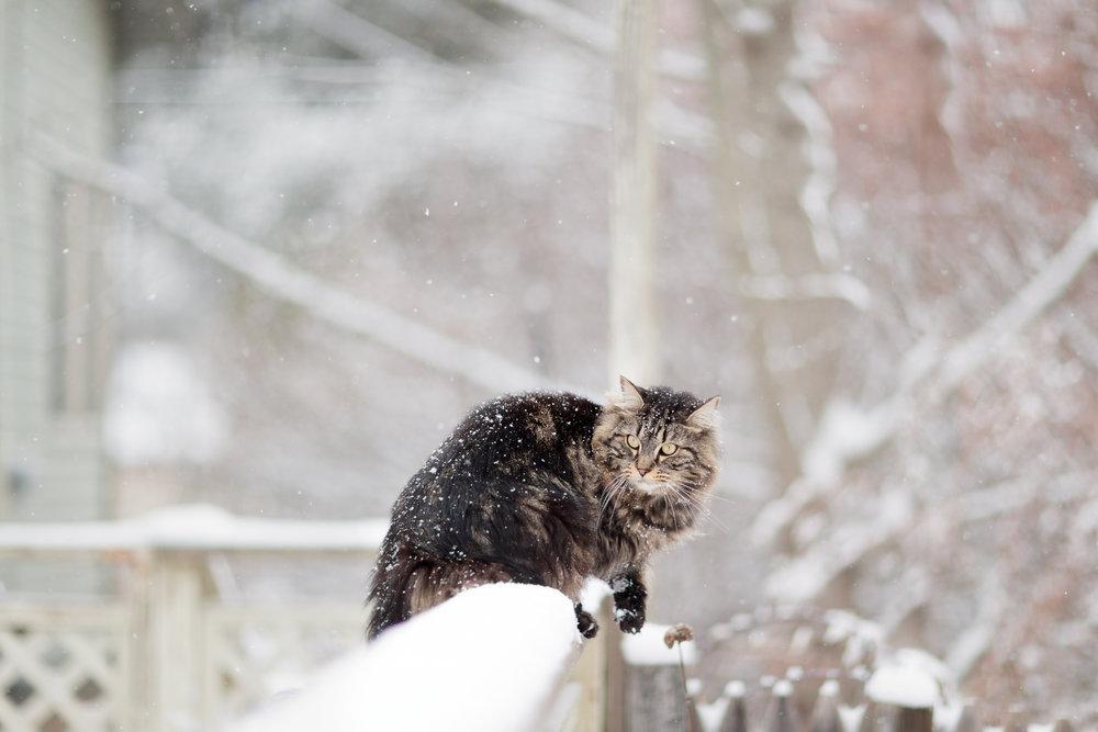 cat on deck in snow in Wakefield, RI