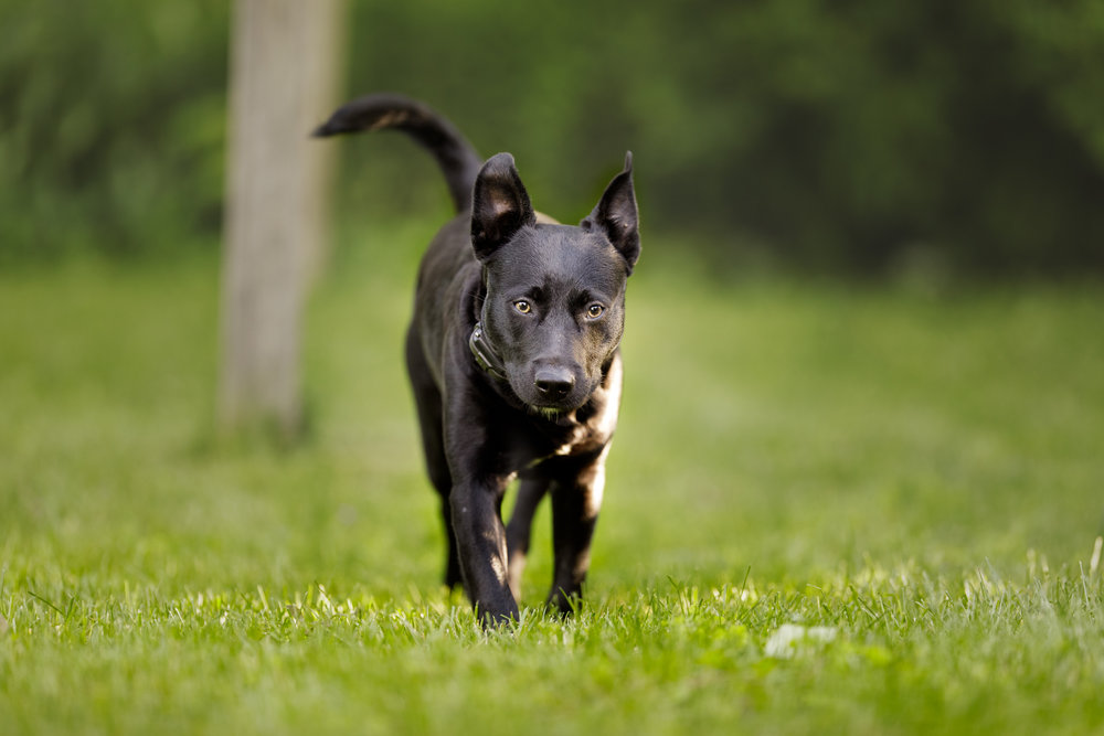 Dog in Wakefield, RI