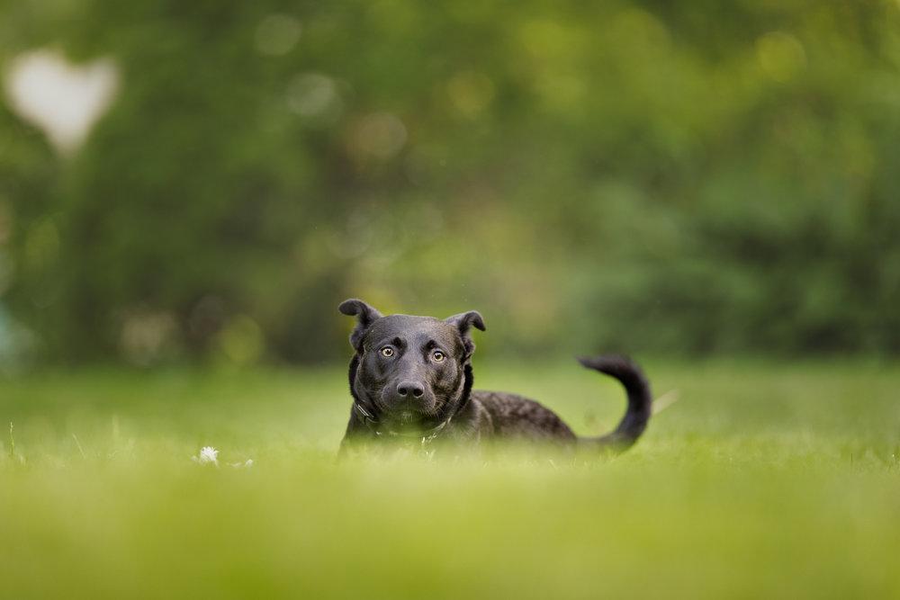 dog in grass in Wakefield, RI