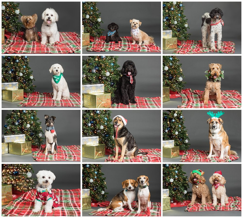 holiday dog photos at Benny And Jack in Wakefield, RI