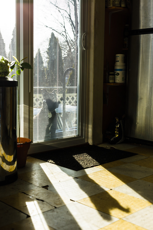dog at sliding glass door