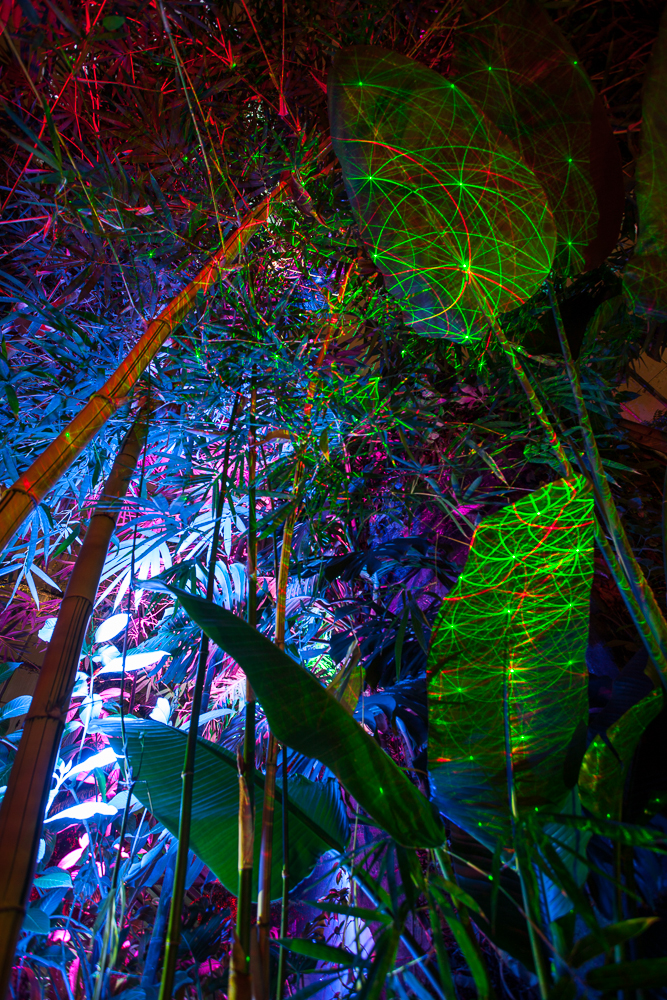 Night Lights at the Gardens 2014-329.jpg