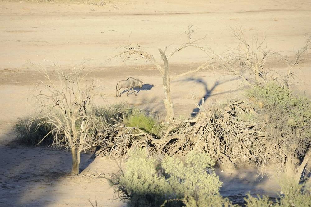 thijsheslenfeld_060_namibia.jpg