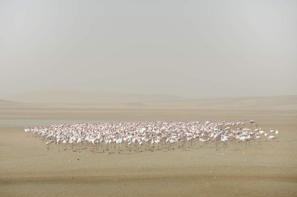 thijsheslenfeld_201_namibia.jpg