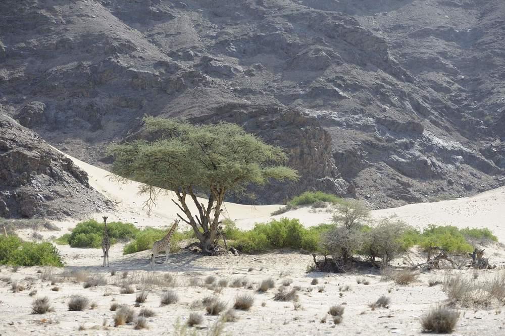 thijsheslenfeld_238_namibia.jpg