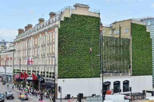 London-Largest-LivingWall1-537x357.jpg