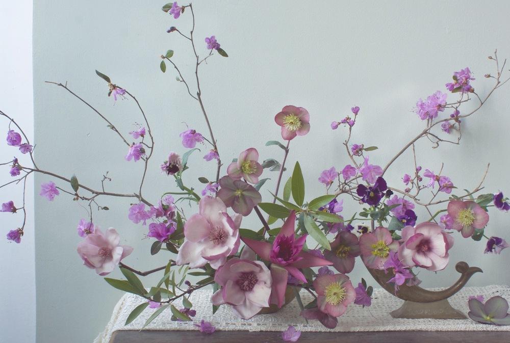 ADF.Magnolia.Hellebores.JPG