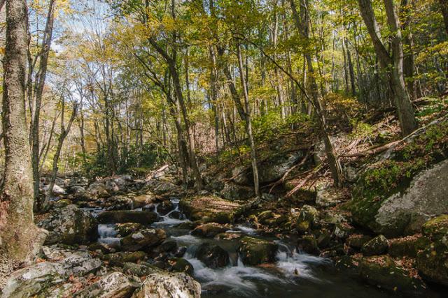 Blacksburg+-+Autumn+-+Catawba+Valley-1.jpg