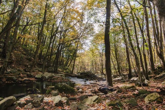 Blacksburg+-+Autumn+-+Catawba+Valley-2.jpg