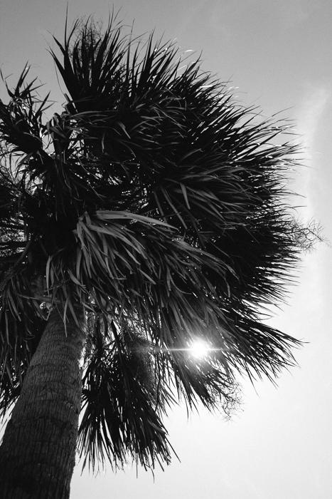 Charleston SC 2013-14.jpg