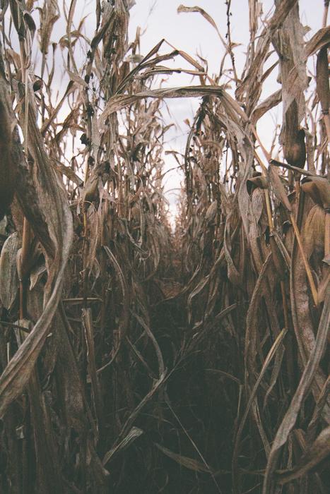 Corn Maze-20.jpg