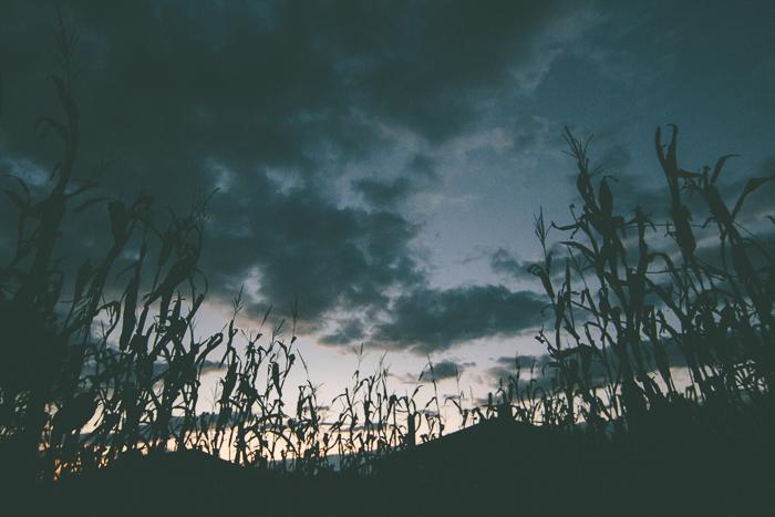 Corn Maze-24.jpg