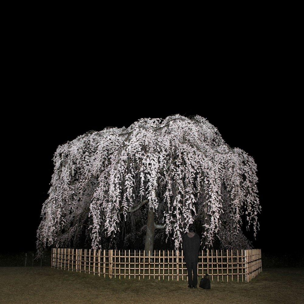 Nightcall by Sascha Weidner