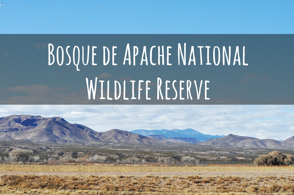 bosque de apache national wildlife reserve
