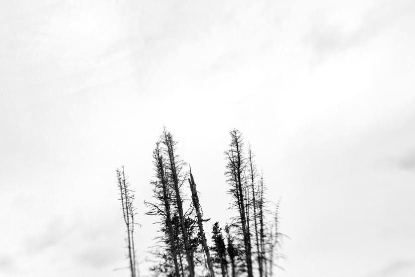 tree-top.jpg
