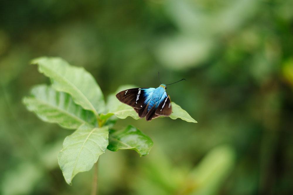 012018-Nicaragua-JuliaLuckettPhotography-59.jpg