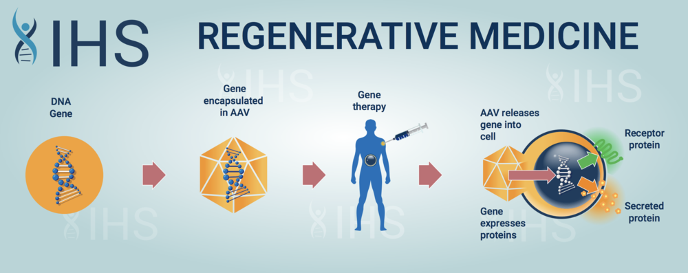 Gene therapy can be performed both inside and outside the body. This infographic illustrates in simple terms how gene therapy works inside the body.