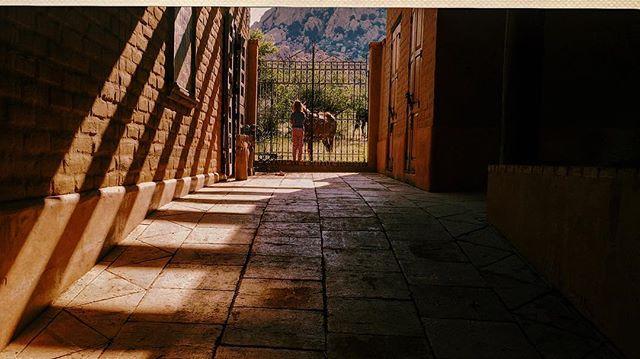 #wakinguptohorses