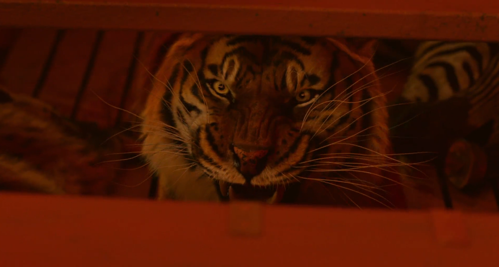 New clip from ang lee 39 s life of pi please send help for Life of pi name