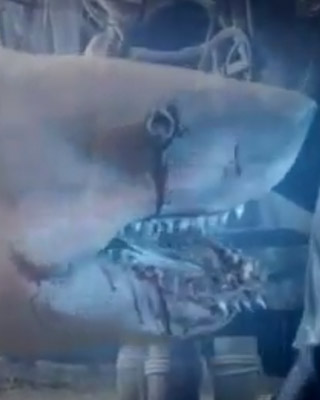 Ghost shark trailer 2014 - Downton abbey season 2 review