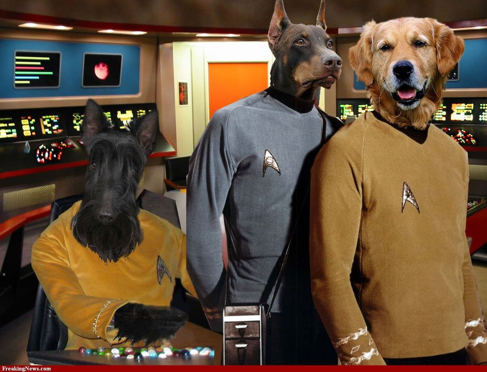 dog-really-loves-star-trek.jpg