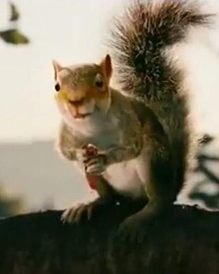 teaser trailer for timur bekmambetov�s killer squirrel