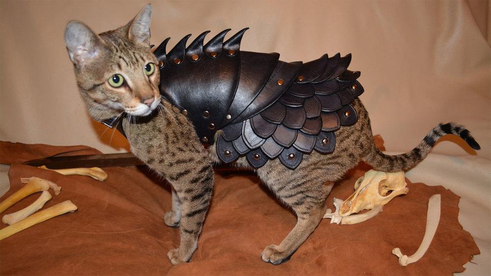 armorcat857585.jpg