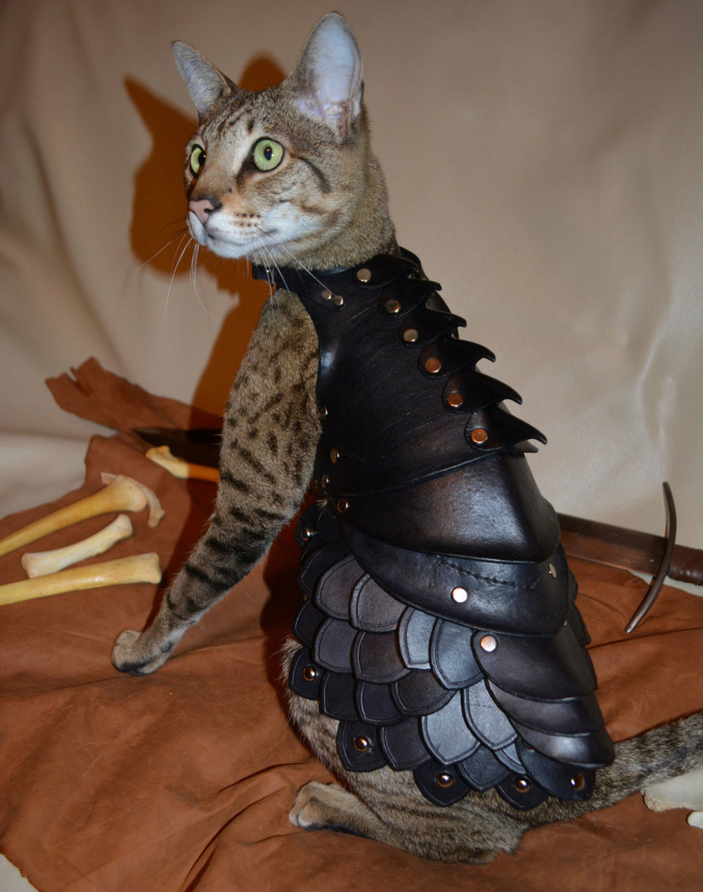 armor7585758cat.jpg