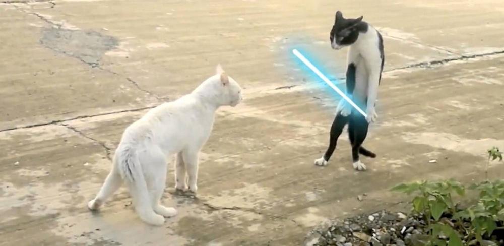 hilarious-jedi-cats-fight-video