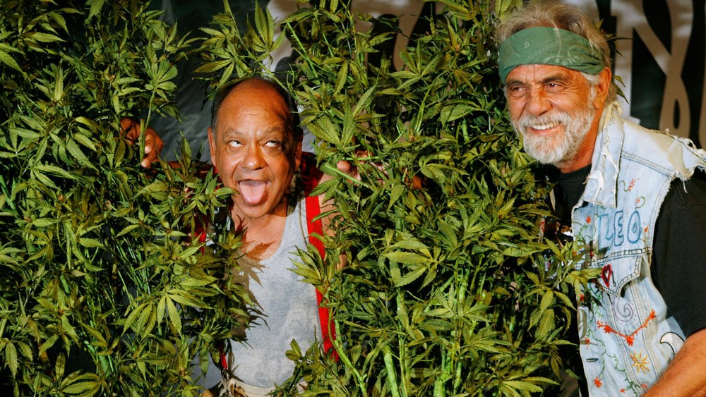 cheech-chong-is-getting-a-new-movie