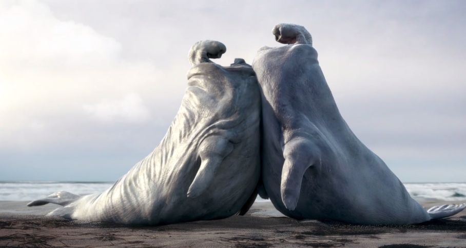 comical-animated-short-film-about-elephant-seals
