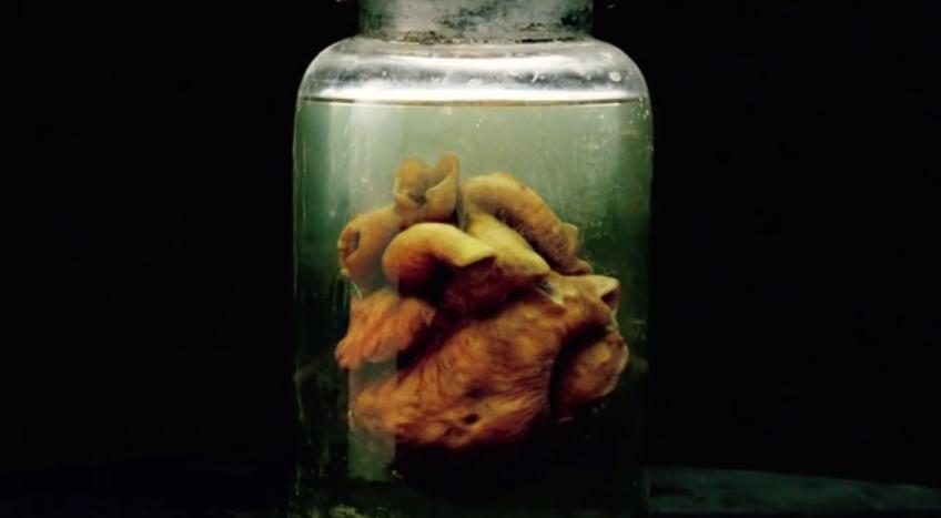 creepy-promo-spot-for-guillermo-del-toros-the-strain-heart